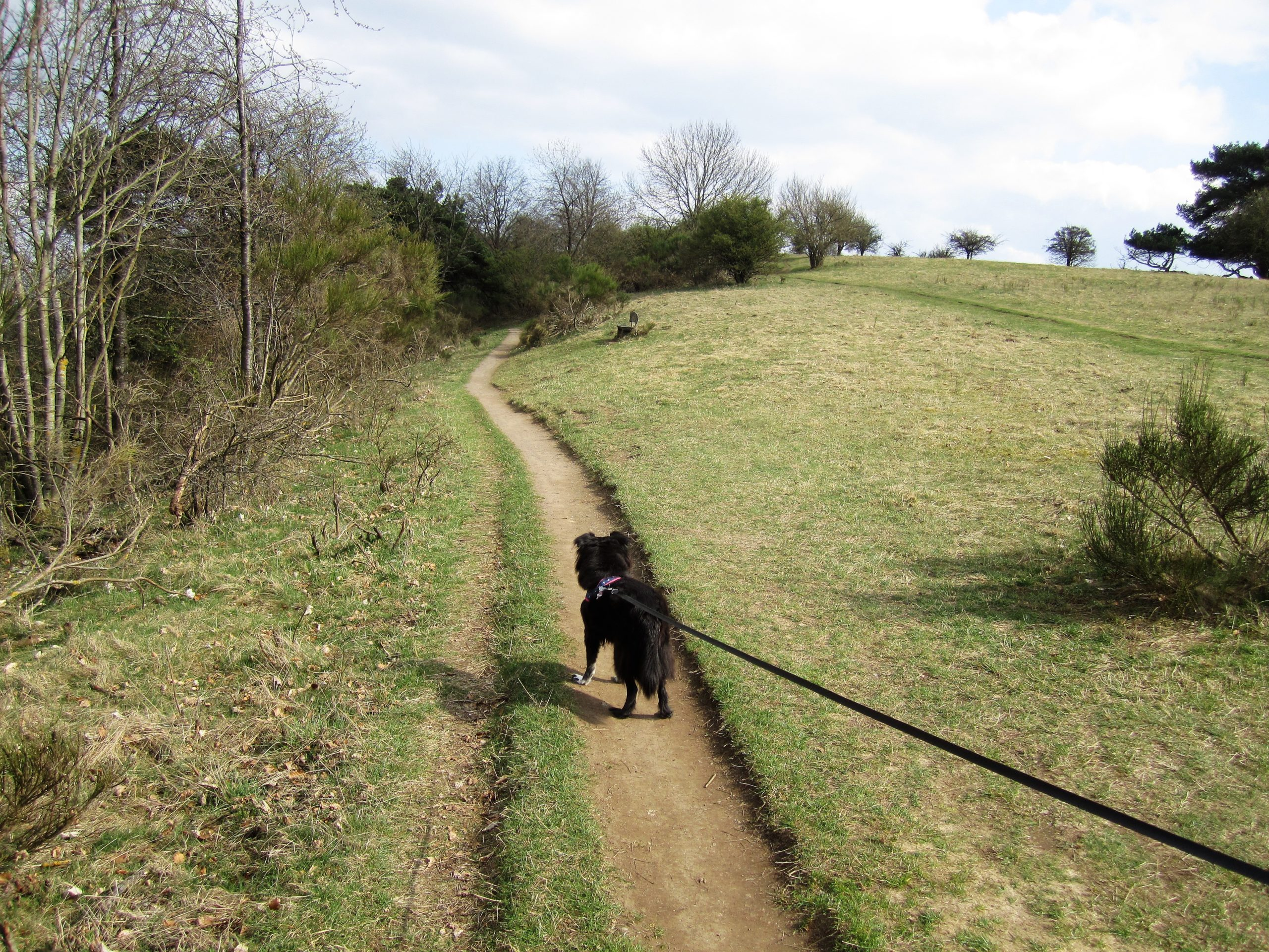 Hund_Spaziergang