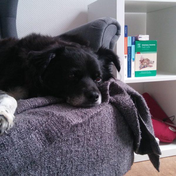 Hund_Demenz
